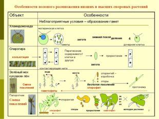 Особенности полового размножения низших и высших споровых растений зигота зим