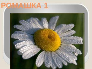 РОМАШКА 1