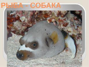 РЫБА - СОБАКА