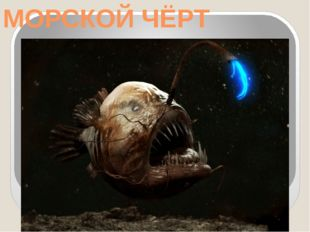 МОРСКОЙ ЧЁРТ