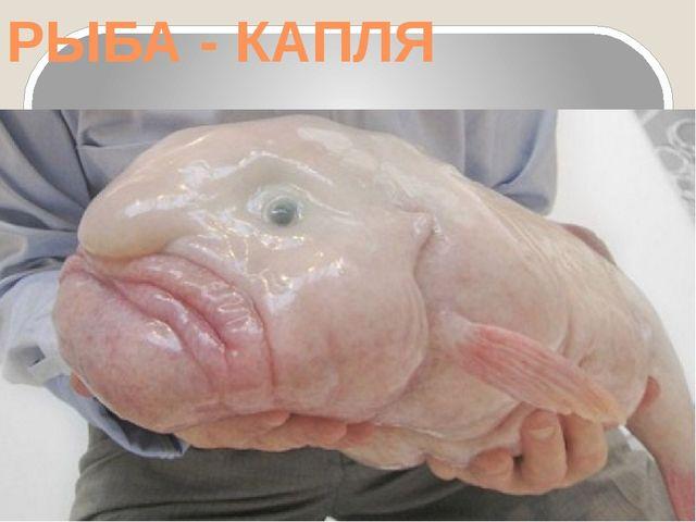 РЫБА - КАПЛЯ