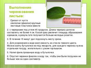 Выполнение черенкования листьев: 2. с черешками под углом 45 градусов. Длина