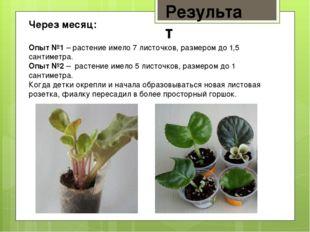 Результат Через месяц: Опыт №1 – растение имело 7 листочков, размером до 1,5