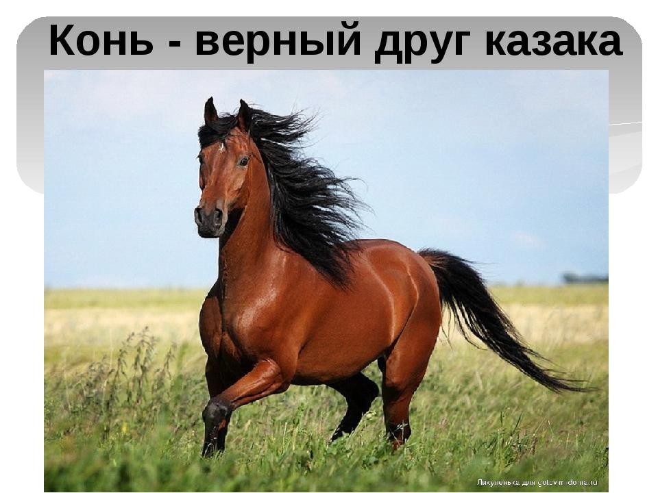 Конь - верный друг казака