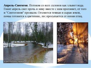 Апрель-Снегогон. Потоком со всех склонов как хлынет вода. Гонит апрель снег п