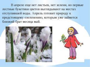 В апреле еще нет листьев, нет зелени, но первые лестные букетики цв