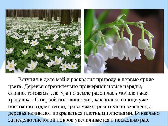 Вступил в дело май и раскрасил природу в первые яркие цвета. Деревья с...