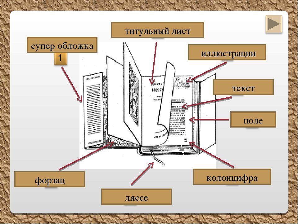 Картинка задняя часть книги