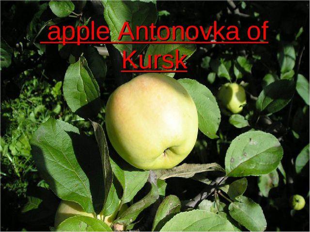 apple Antonovka of Kursk