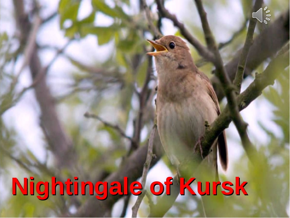Kursk Nightingale Nightingale of Kursk
