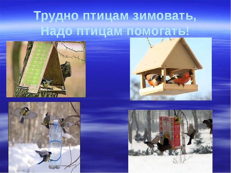 Трудно птицам зимовать, Надо птицам помогать!