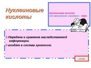 Нуклеиновая кислота от латинского «нуклеус» - ядро. Нуклеиновые кислоты 1-Пер
