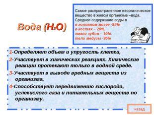 Самое распространенное неорганическое вещество в живом организме –вода. Средн