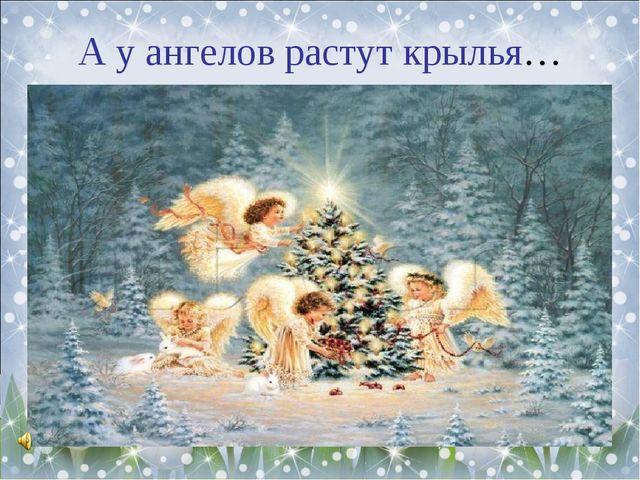 А у ангелов растут крылья…
