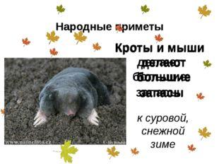 Кроты и мыши делают большие запасы к суровой, снежной зиме Народные приметы К