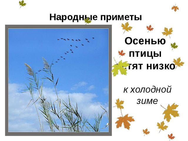 Осенью птицы летят низко к холодной зиме Народные приметы