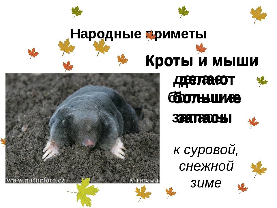 Кроты и мыши делают большие запасы к суровой, снежной зиме Народные приметы К...