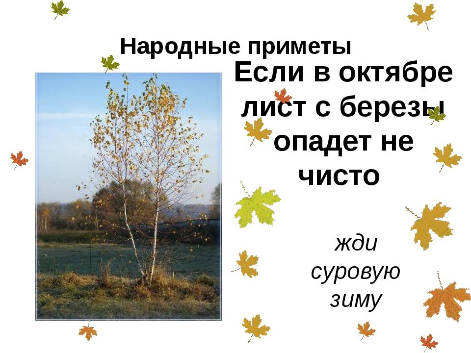 Если в октябре лист с березы опадет не чисто жди суровую зиму Народные приметы