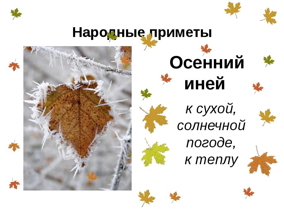 Осенний иней к сухой, солнечной погоде, к теплу Народные приметы