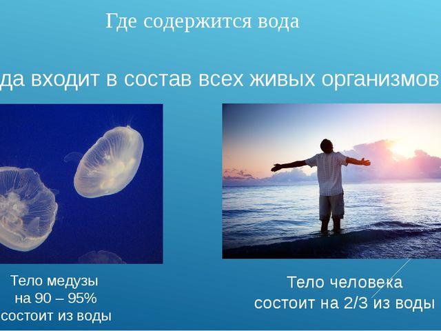 Где содержится вода Вода входит в состав всех живых организмов Тело медузы на...