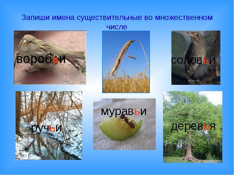 Запиши имена существительные во множественном числе воробьи колосья соловьи р...