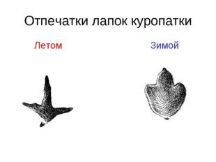 Отпечатки лапок куропатки Летом Зимой