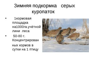 Зимняя подкормка серых куропаток  1кормовая площадка на1000га.учётной лини