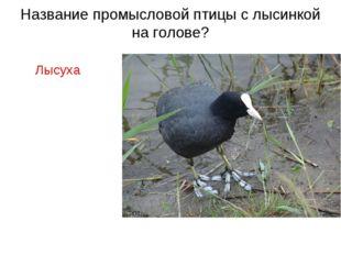 Название промысловой птицы с лысинкой на голове? Лысуха