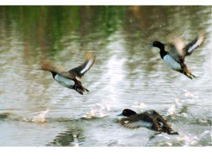 ` Известно, что птицы – лучшие певцы среди животных; они способны производить