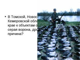 В Томской, Новосибирской, Омской, Кемеровской областях и Алтайском крае к объ