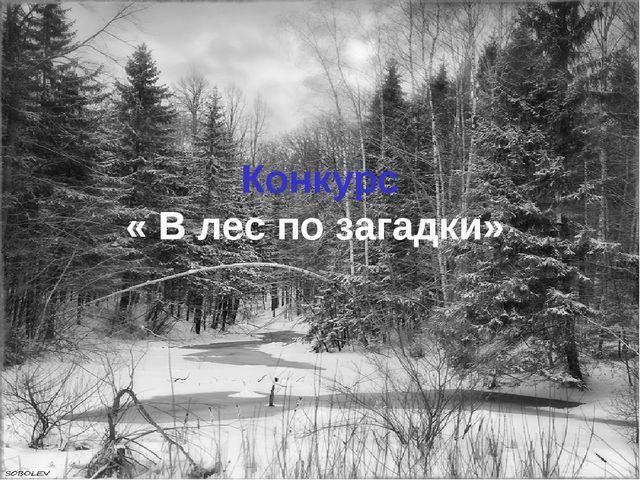 Конкурс « В лес по загадки»