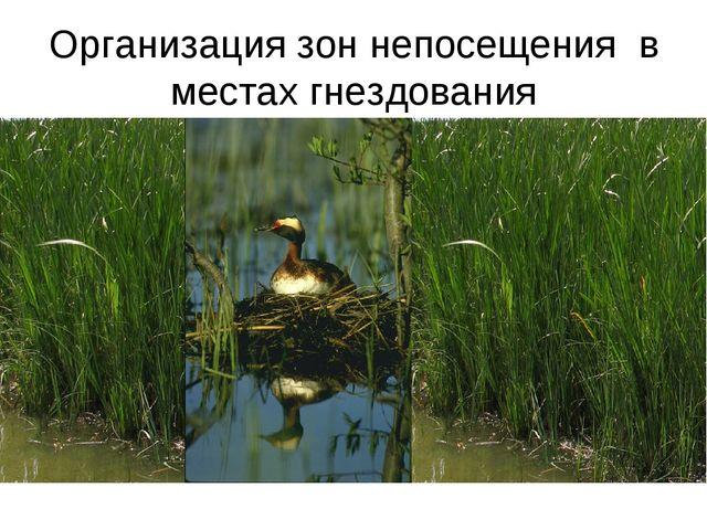 Организация зон непосещения в местах гнездования