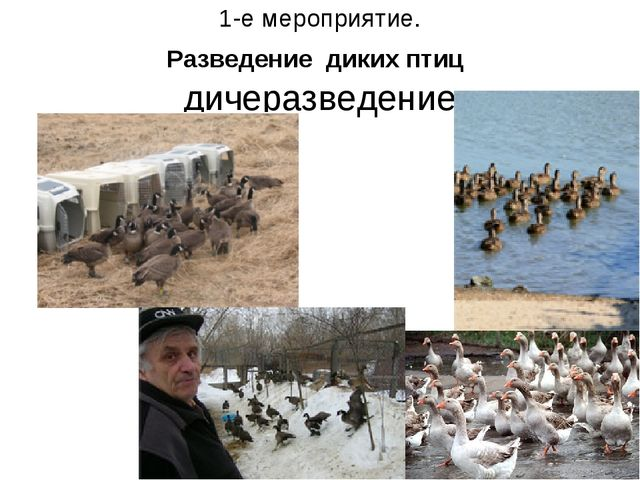 1-е мероприятие. Разведение диких птиц дичеразведение