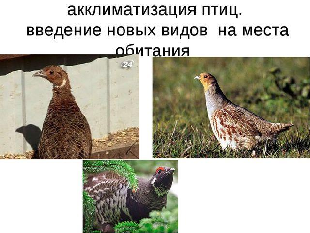акклиматизация птиц. введение новых видов на места обитания