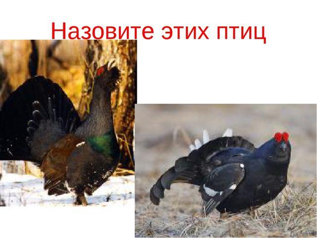 Назовите этих птиц