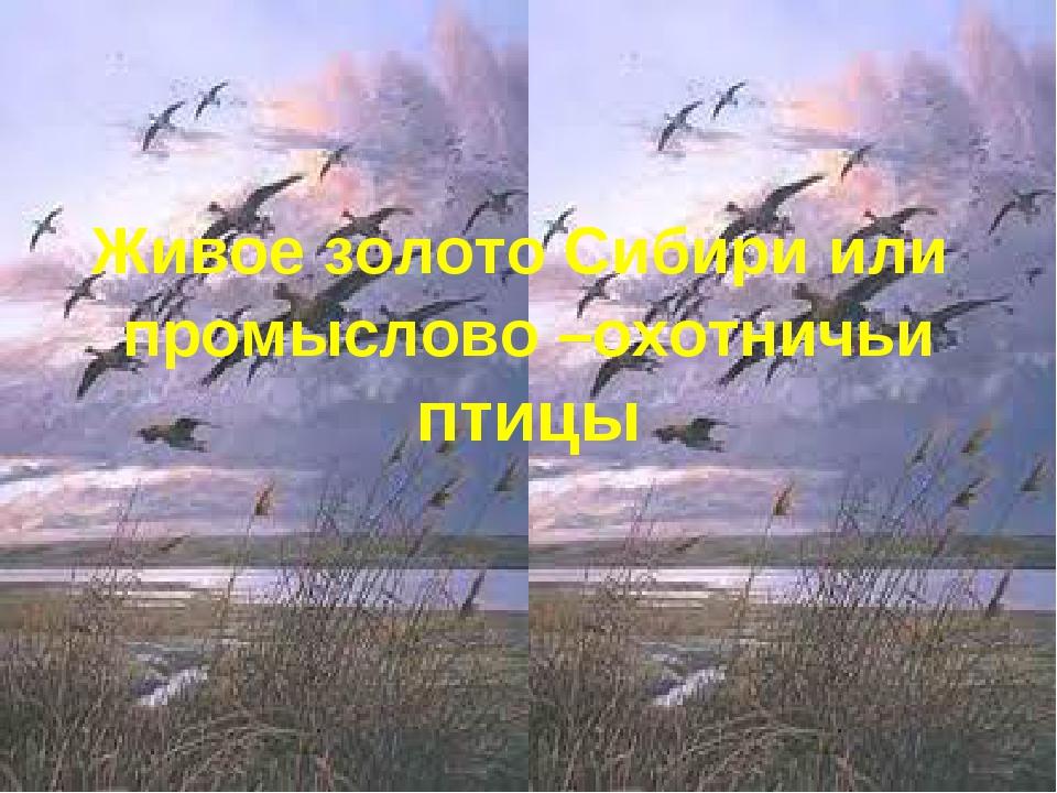 Живое золото Сибири или промыслово –охотничьи птицы