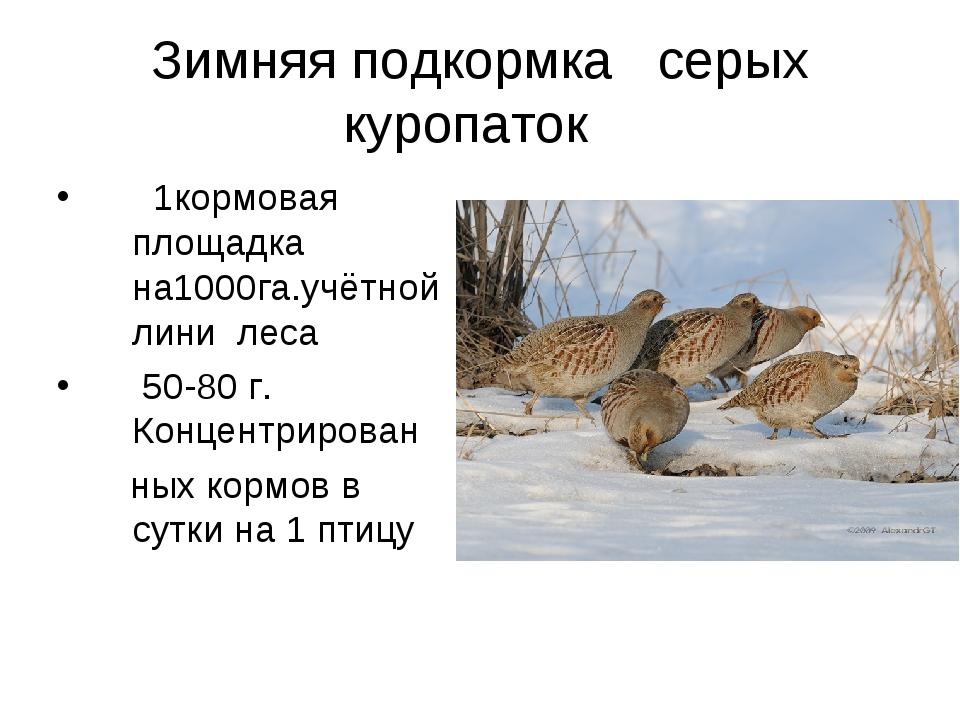 Зимняя подкормка серых куропаток  1кормовая площадка на1000га.учётной лини...