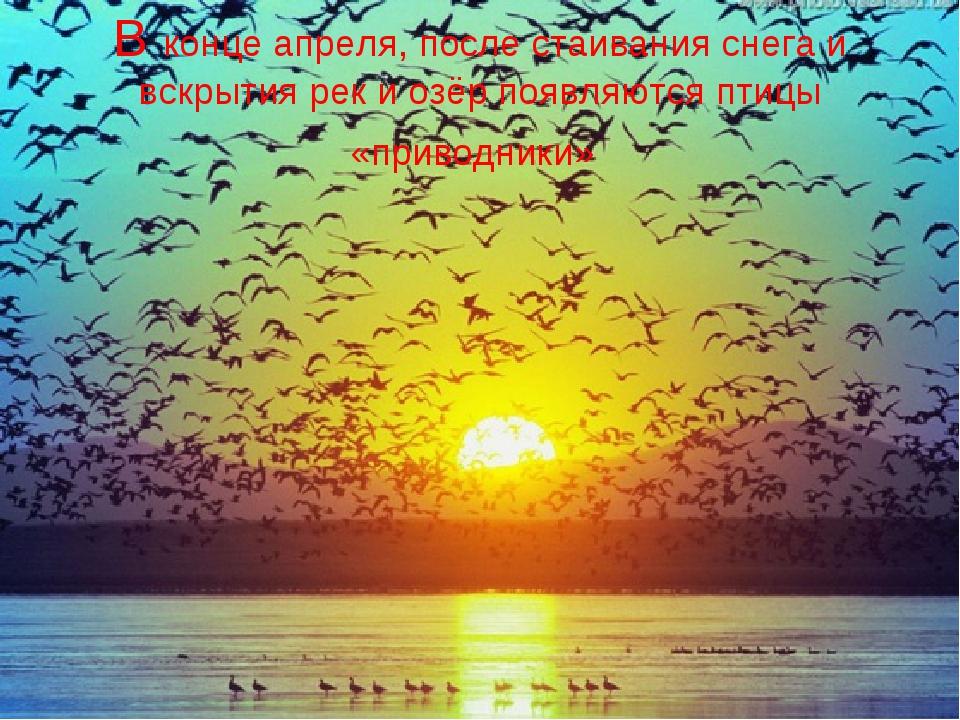 В конце апреля, после стаивания снега и вскрытия рек и озёр появляются птицы...