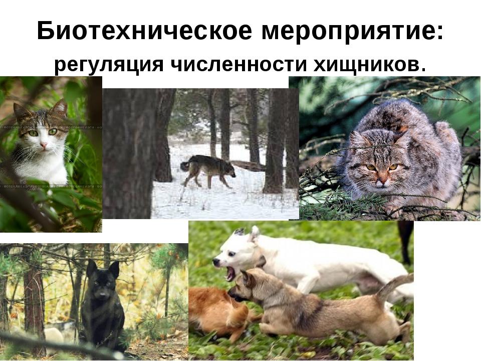 Биотехническое мероприятие: регуляция численности хищников.