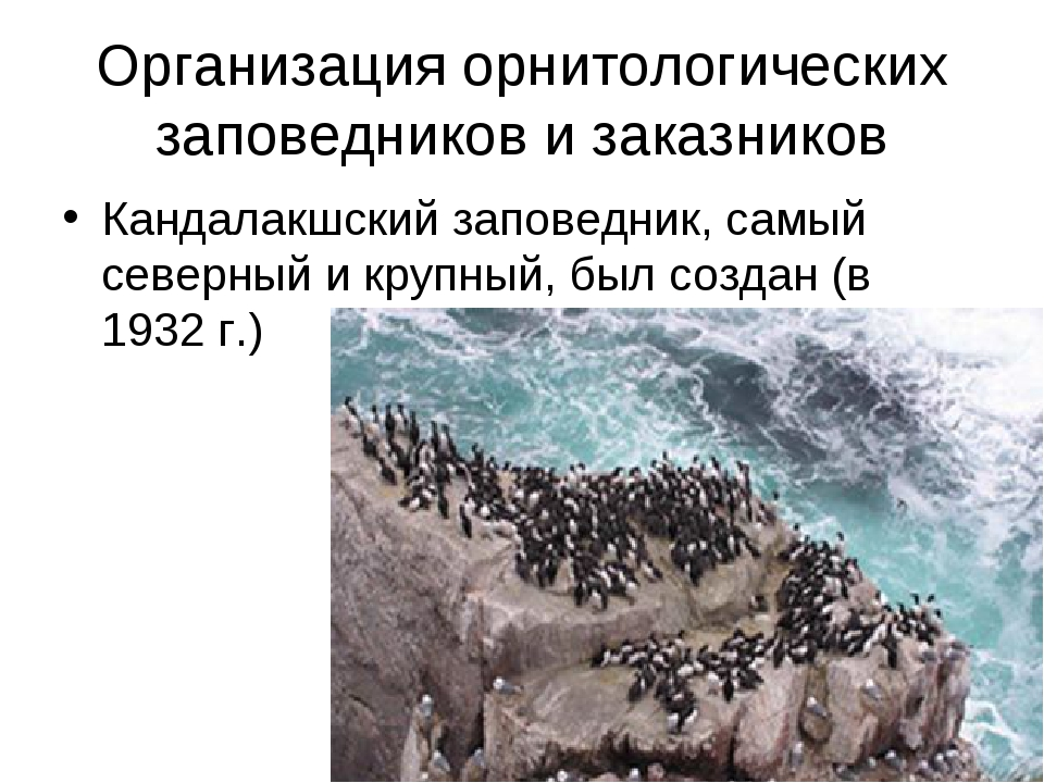 Организация орнитологических заповедников и заказников Кандалакшский заповедн...