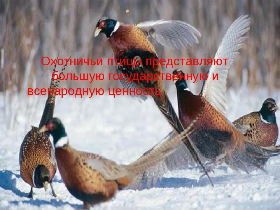 Охотничьи птицы представляют большую государственную и всенародную ценность