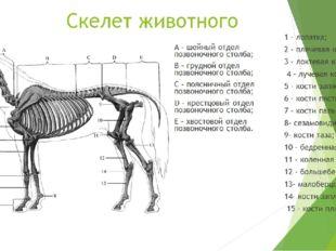 Скелет животного