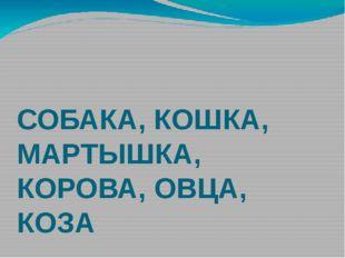 СОБАКА, КОШКА, МАРТЫШКА, КОРОВА, ОВЦА, КОЗА