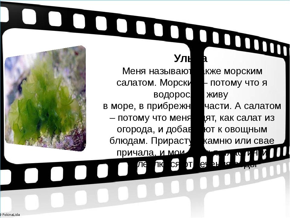 Ульва Меня называют также морским салатом. Морским – потому что я водоросль,...