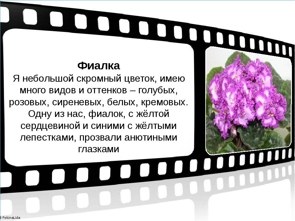 Фиалка Я небольшой скромный цветок, имею много видов и оттенков – голубых, ро...