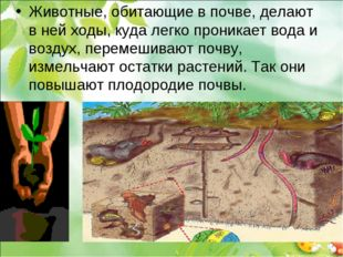 Животные, обитающие в почве, делают в ней ходы, куда легко проникает вода и в
