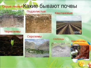 Какие бывают почвы Серые лесные Черноземы Подзолистые Солонцы Каштановые Крас