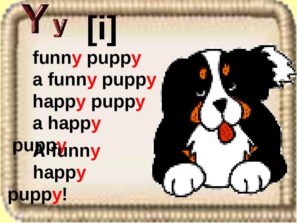 funny puppy a funny puppy happy puppy a happy puppy [i] A funny happy puppy!