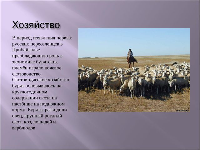 В период появления первых русских переселенцев в Прибайкалье преобладающую ро...