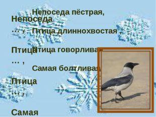 Непоседа … , Птица … , Птица … , Самая … . Непоседа пёстрая, Птица длиннохвос